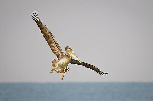 Christine Kapler - Pelican landing