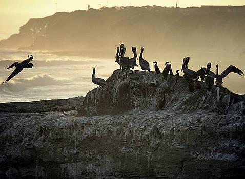 Chuck Kuhn - Pelican landing