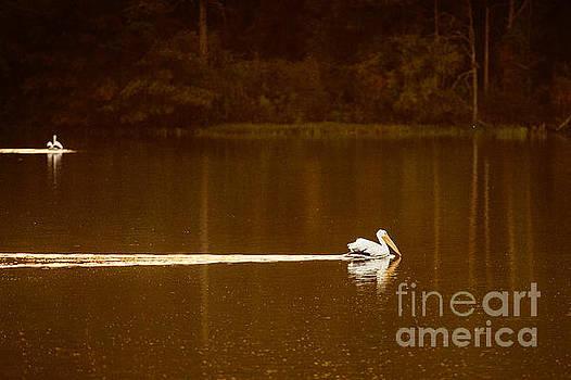 Tamyra Ayles - Pelican Landing