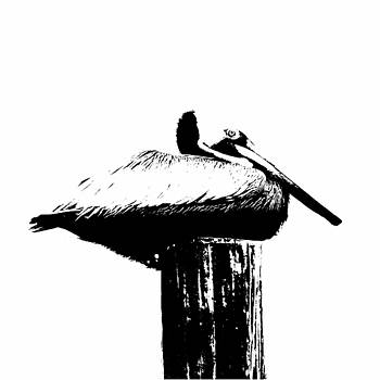 Pelican Laying On A Post - Silhouette by Joey OConnor