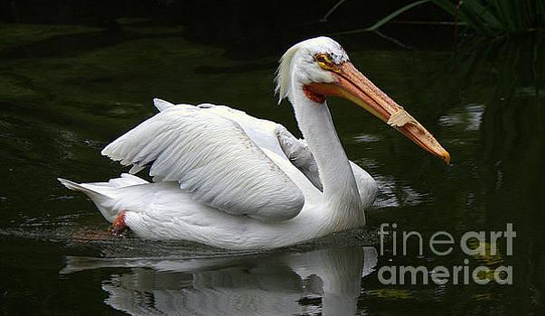 Pelican by Lisa L Silva