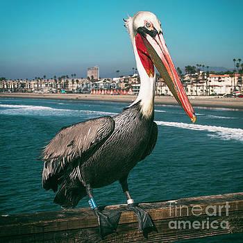 Pelican Lookout by Kasia Bitner