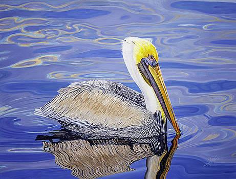 Pelican  by Manuel Lopez