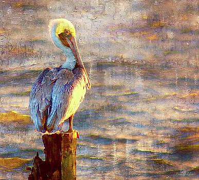 Pelican on Pause by Brian Lukas