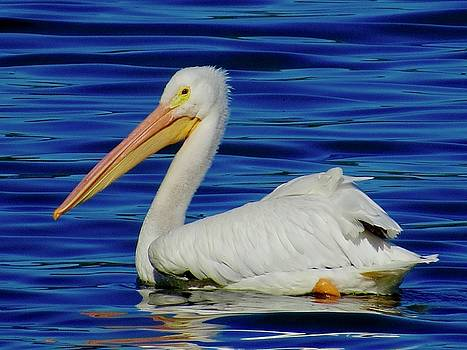 Pelican On the Lake by Phil Bearce