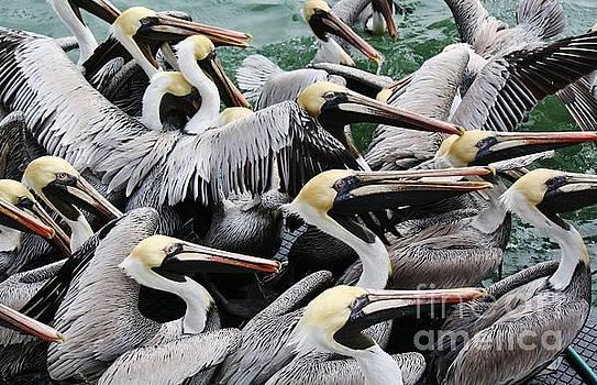 Paulette Thomas - Pelican Party