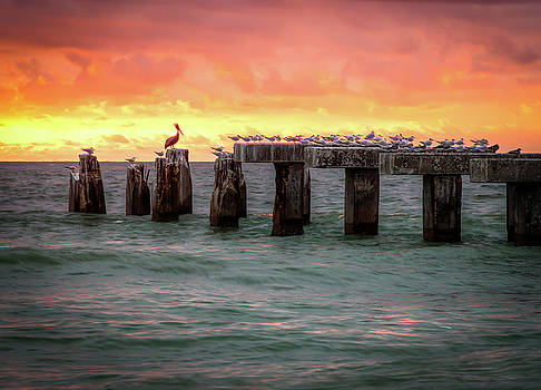 Pelican Perched on Phosphate Tracks by R Scott Duncan