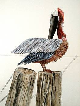 Pelican Portrait by Joan Mansson