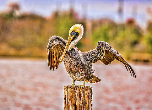 Pelican Pose by Jane Anne Sawyer