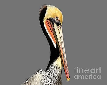 Pelican Posing by Susan Wiedmann