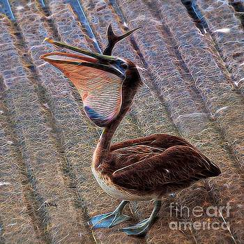 Pelican Quandary  by Patrick Witz
