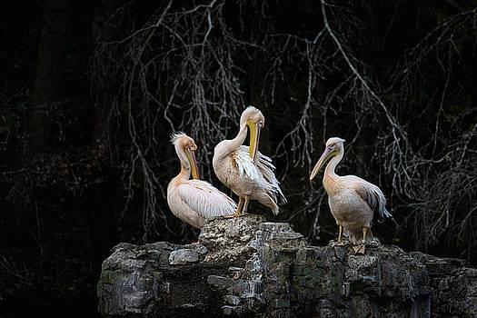 Pelican Rock by Matt Malloy