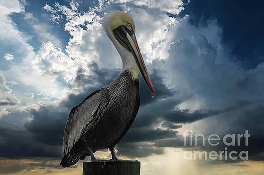 Pelican Sky by Dale Powell