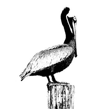 Pelican Standing On A Post - Silhouette by Joey OConnor