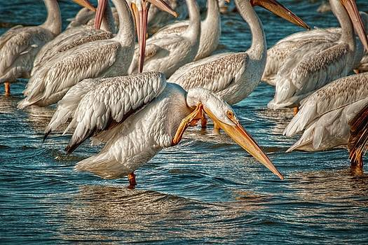 Pelican Summer by Linda Unger