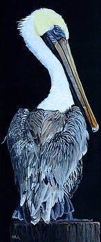 Pelican by Vicky Path