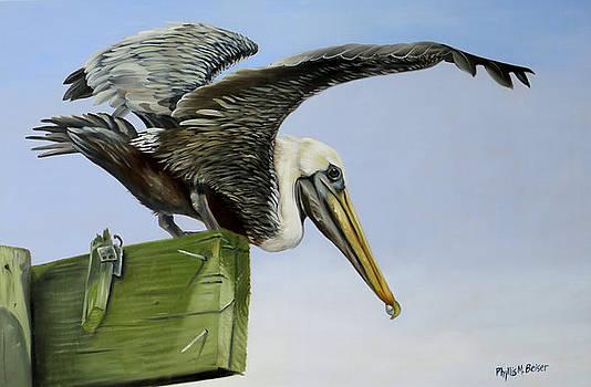 Pelican Wings by Phyllis Beiser