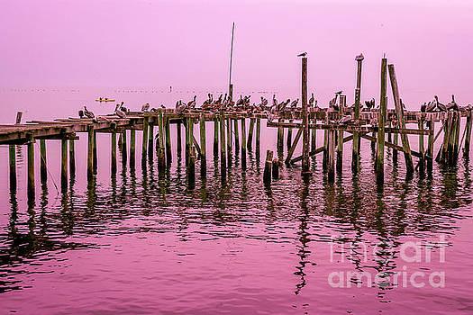 Pelicans at Cedar Key by Thomas Levine