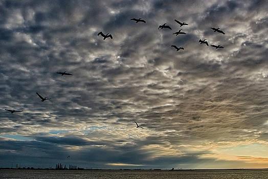Pelicans at Dusk by Robert Brown