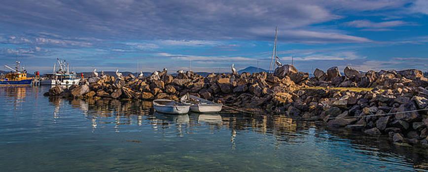 Racheal Christian - Pelicans at Eden Wharf