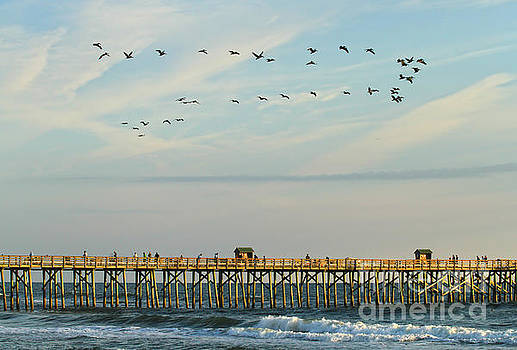 Deborah Benoit - Pelicans At Flagler Beach