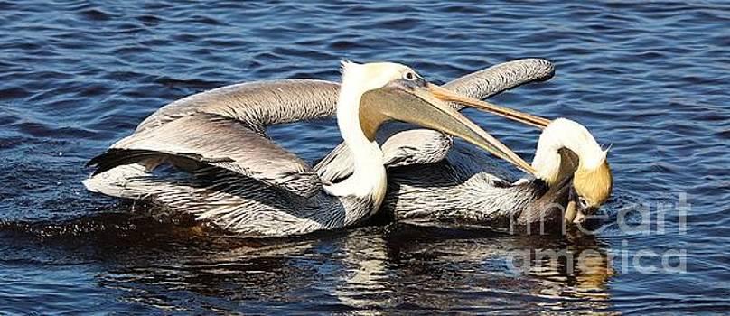 Paulette Thomas - Pelicans Fighting
