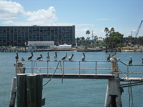 Pelicans in a Row by Val Oconnor