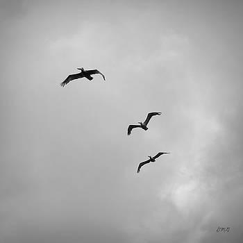 David Gordon - Pelicans in Flight I BW