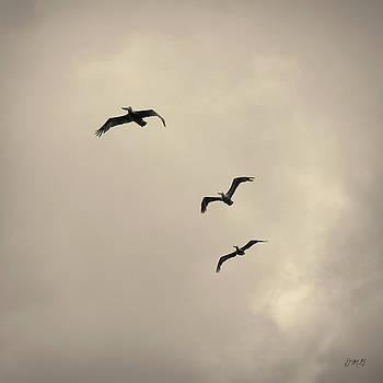 David Gordon - Pelicans in Flight I Toned