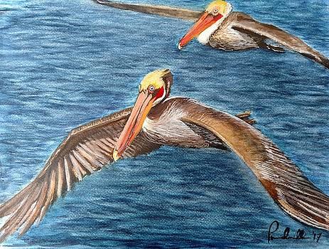 Pelicans by John Prenderville
