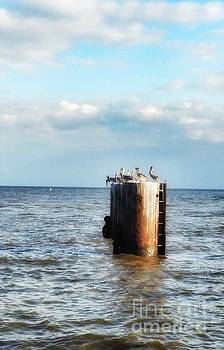 Pelicans on the Piling  by Southern Tradition