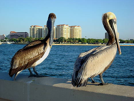 Pelicans on the Wall by Julie Pappas