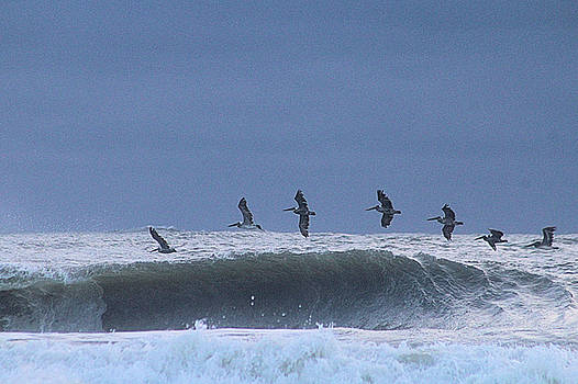 Pelicans Over A Wave by Robert Banach