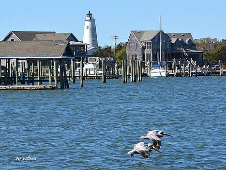 Pelicans over Silver Lake by Dan Williams