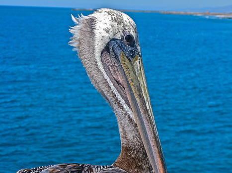 Pelican's Peek by PJ  Cloud