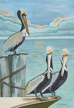Pelicans Three by Jennifer  Donald