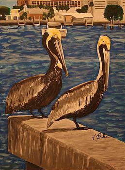 Pelicans by Tony Baker