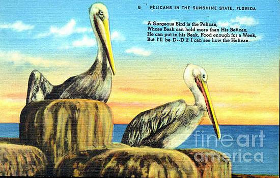 Pelicans Vintage Postcard by Jennifer Capo