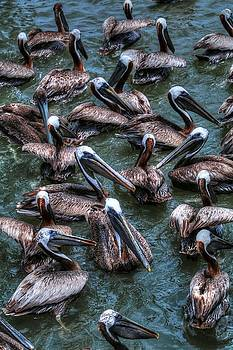 Pelicans Wait For Left Overs  by Carol Montoya