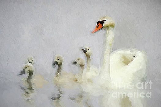 Pen and her Cygnets by Darren Fisher