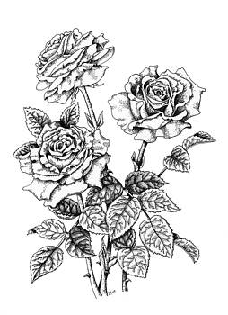 Pen and Ink Roses by Lynne Henderson