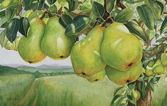 Pendulous Pears by Tara D Kemp