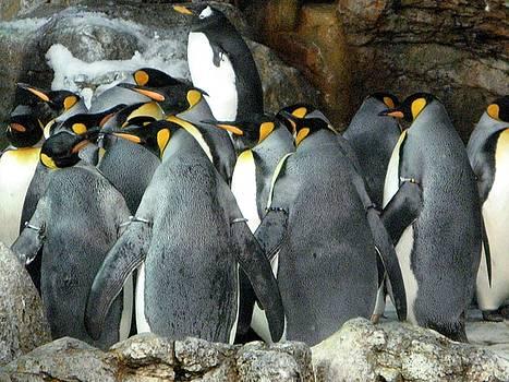 Penguin Prayer Circle by Cheri Carman