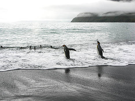 Penguins Go Swimming by Cheryl Ramalho