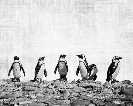 Delphimages Photo Creations - Penguins