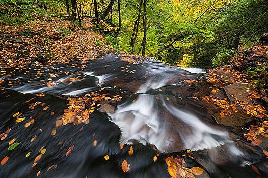 Pennsylvania Ricketts Glen State Park by Mark VanDyke