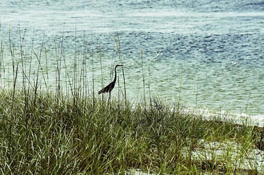 Laurie Perry - Pensacola Shore Bird