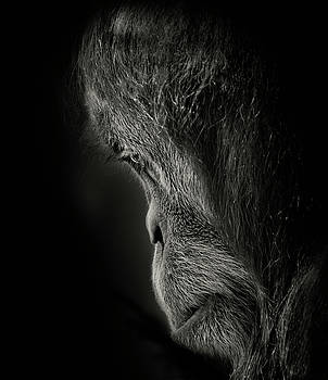 Pensive by Animus Photography