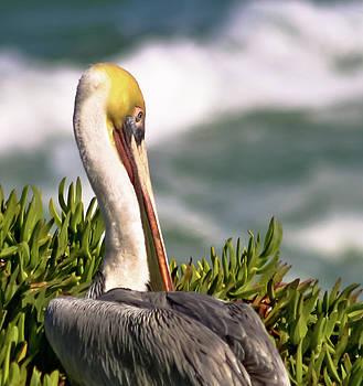 Pensive Pelican by Nabila Khanam