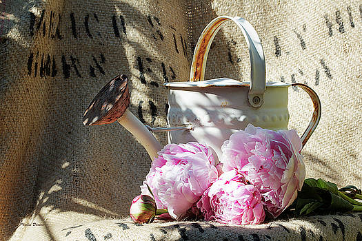 Peonies And Old Watering Can by Phyllis Denton
